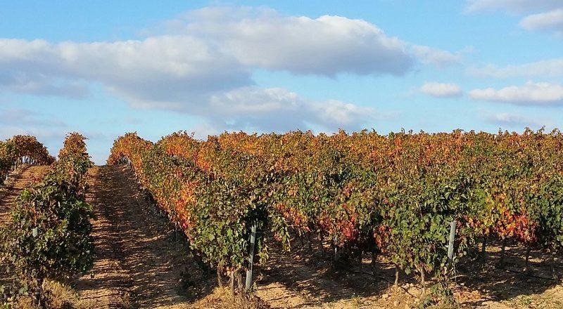 rioja viñedo